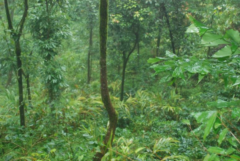 Sceneries at Coorg