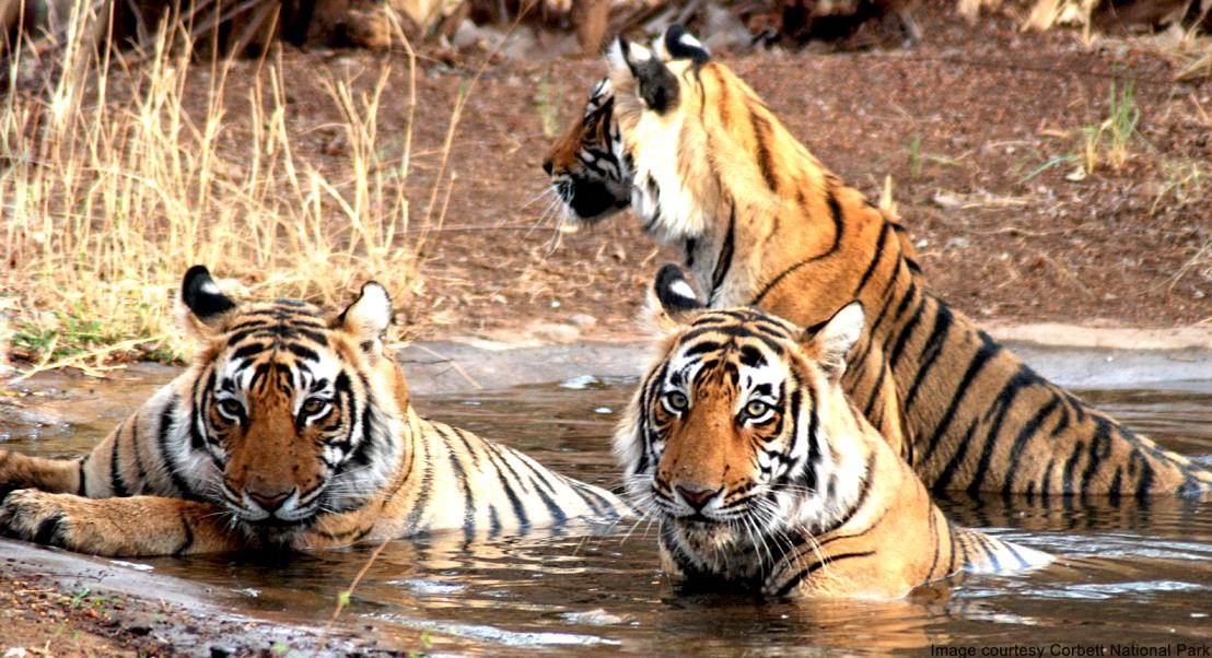 Indian Treasures – Forests and Wildlife