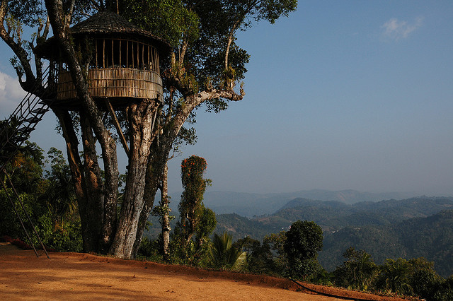 Treehouse in a homestay in Munnar