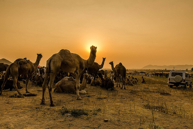 Pushkar Fair : Guide to the Iconic Festival in Rajasthan