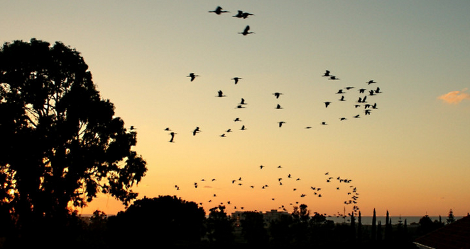 Notice how the birds add life and movement to the picture. Image source: bahai.org